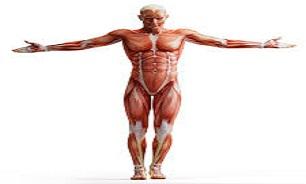 بدنتان با شما حرف میزند